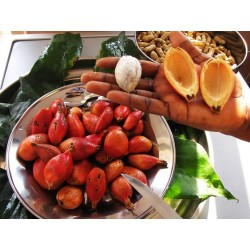 Semillas Jinguenga, fruta del cielo (Aframomum alboviolaceum) 3.45 - 8