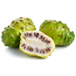 Σπόροι Νόνι (Morinda citrifolia) 1.95 - 1