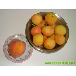 Sementes de Tomate pêssego (Peach tomato)