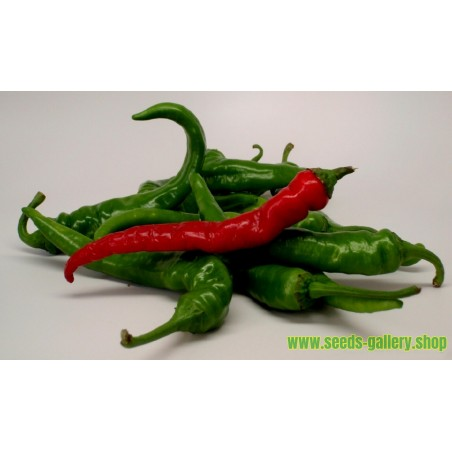 Chilipeppar Cayenne Long Slim Frön