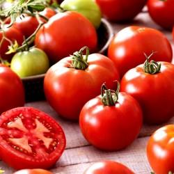 Sementes de tomate Saint Pierre 1.5 - 3
