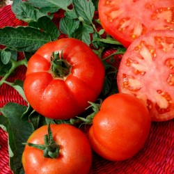 Tomato Seeds Saint Pierre 1.5 - 4