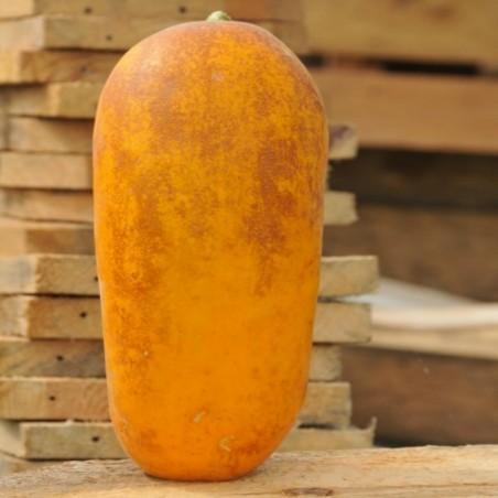 Graines de concombre HMONG RED 2.05 - 1