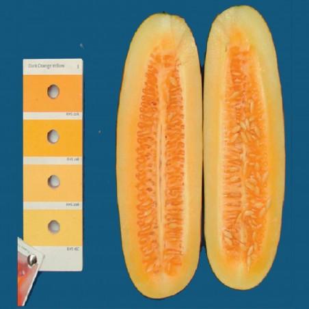 Graines de concombre HMONG RED 2.05 - 2