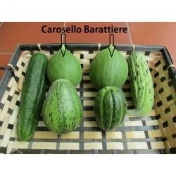 Sementes de Melon - Pepino Carosello Barattiere 2.95 - 3
