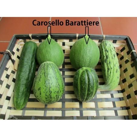 Gurkenmelone Samen Carosello Barattiere 2.95 - 3