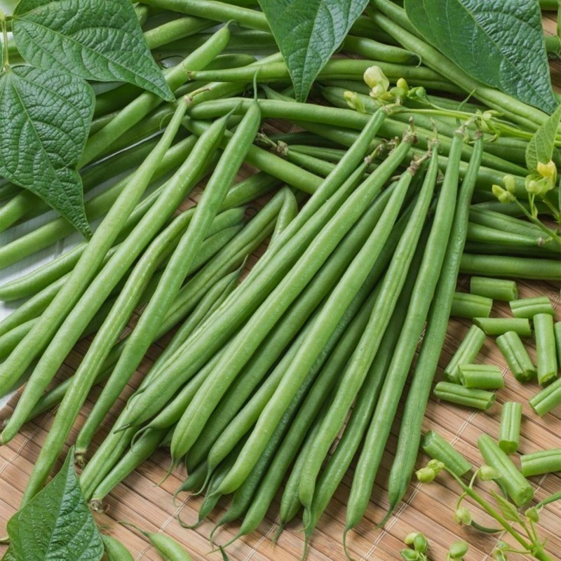 Buschbohnen Samen Top Crop (Topcrop) 1.35 - 1