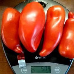 Sementes de tomate JERSEY DEVIL 1.95 - 5