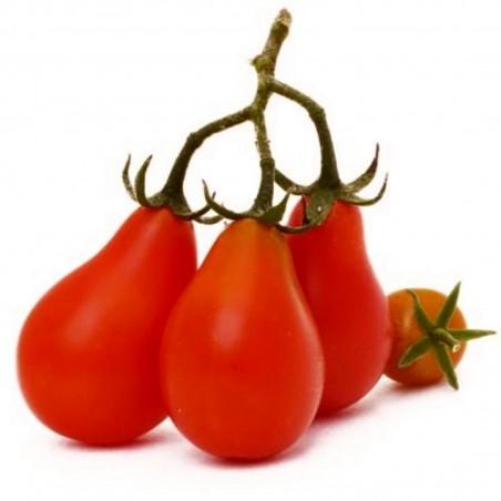 Red Pear, Rotes Birnchen Tomate Samen