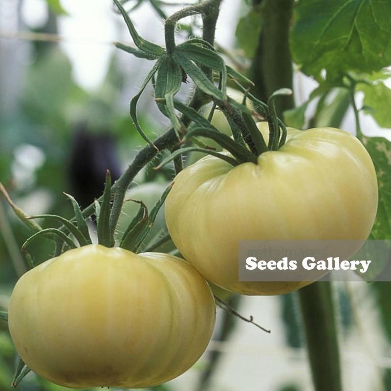 Semillas de Tomate Blanco Asombro 1.65 - 2