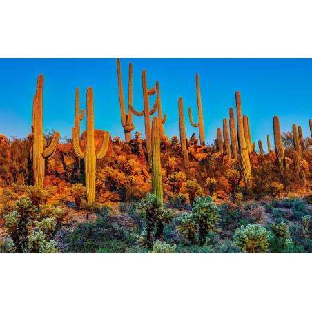 Saguaro Cactus Seeds (Carnegiea gigantea) 1.8 - 5