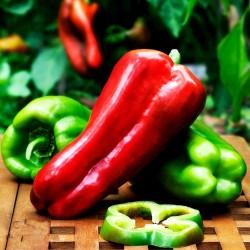 Largo de Reus sweet bell pepper seeds 1.8 - 2