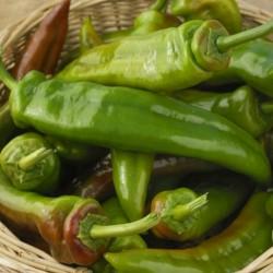 Italienische Riesen Lange Paprika Samen 1.75 - 1