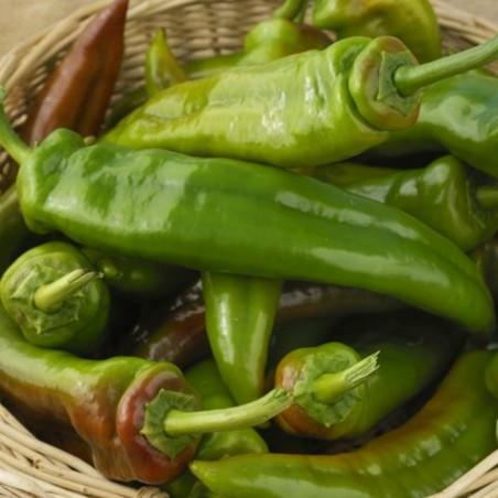 Italian Giant long Sweet Pepper Seeds 1.75 - 1
