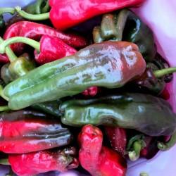 Crystal Spanish sweet pepper seeds 1.75 - 4