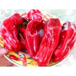 Crystal Spanish sweet pepper seeds 1.75 - 6