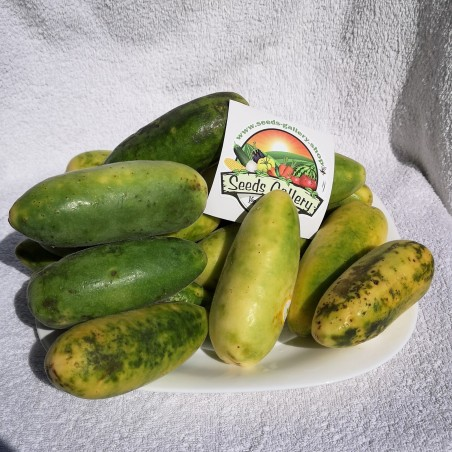 Banana Passionfruit Seeds - Curuba 1.85 - 2