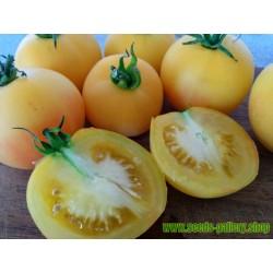 Graines Tomate Ancienne Jaune