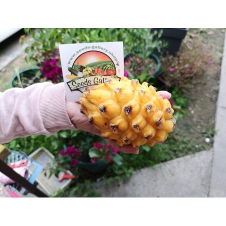 Graines de Pitaya Jaune - Fruit du Dragon 2.5 - 4