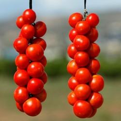 Graines de tomates...