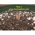Semillas de Granadilla Passiflora caerulea