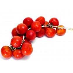 Spanish Hanging Tomato Seeds 1.75 - 2