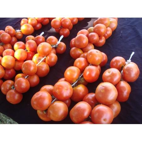 Spanska hängande tomatfrön 1.75 - 3