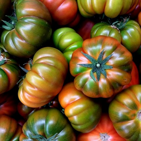 Authentische Muchamiel Tomatensamen