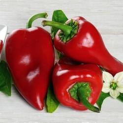 Piquillo - Пикильо Сладкий перец Семена 1.65 - 1