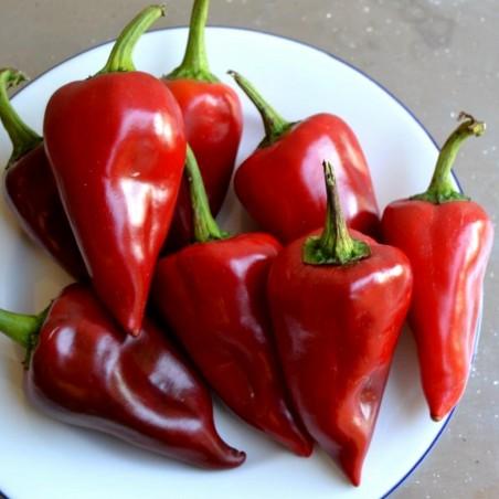 Piquillo Paprika Samen 1.65 - 4