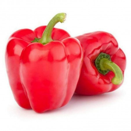 Maor Sweet Pepper Seeds