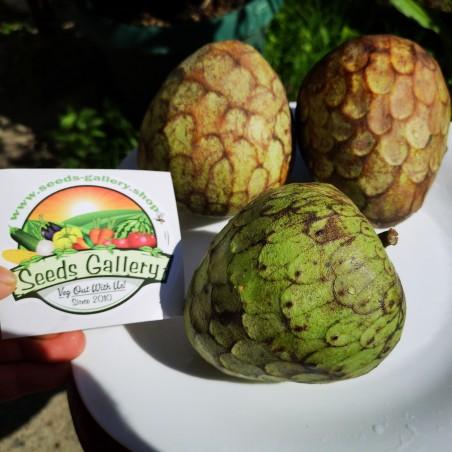 Sugar Apple, Cherimoya Seeds (Annona cherimola) 1.95 - 2