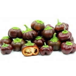 Paprika Samen MINI BELL Chocolate 1.95 - 1