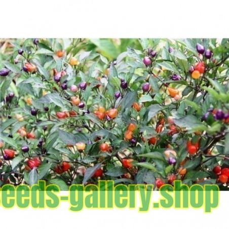 Σπόροι τσίλι Centennial Numex