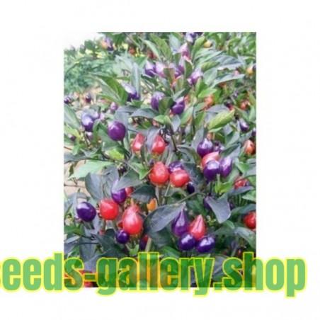 Sage - Garden Sage Seeds