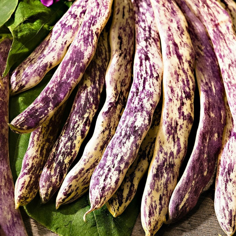 Semi di Fagiolo Merveille de Piemonte 2.5 - 1