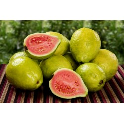 Common guava Seeds (Psidium guajava) 1.8 - 4