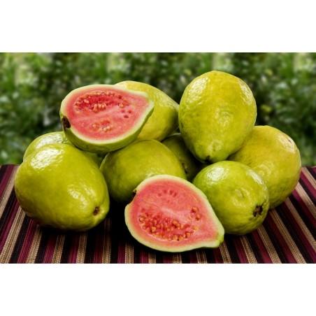 Echte Guave Samen (Psidium guajava) 1.8 - 4