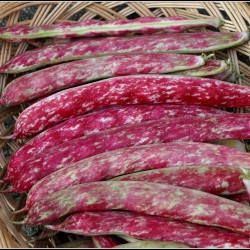 Семена красной фасоли в Буэнос-Айресе 1.95 - 1