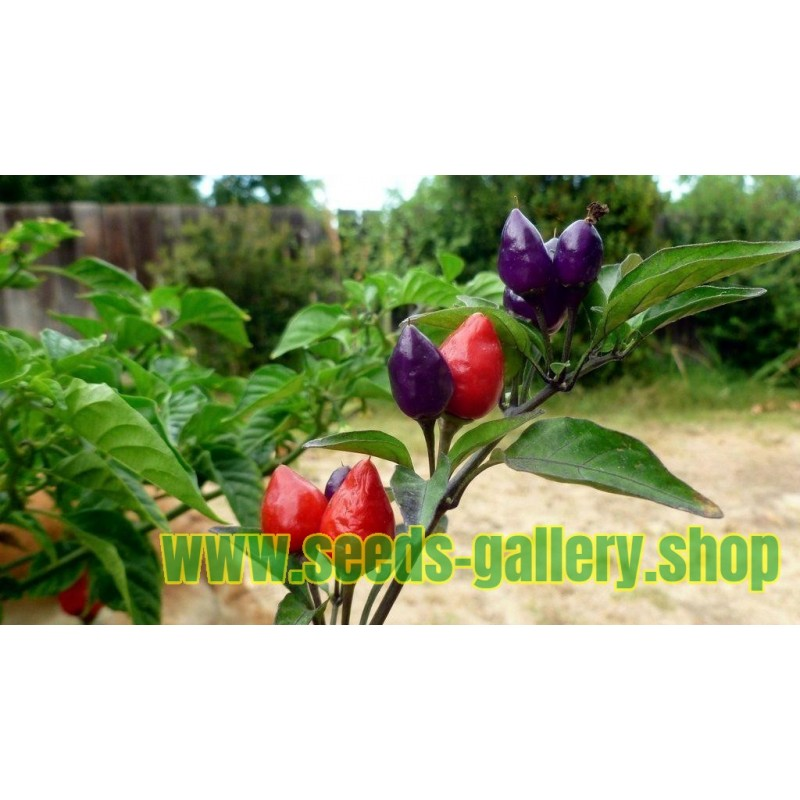Chili Numex Centennial Seeds
