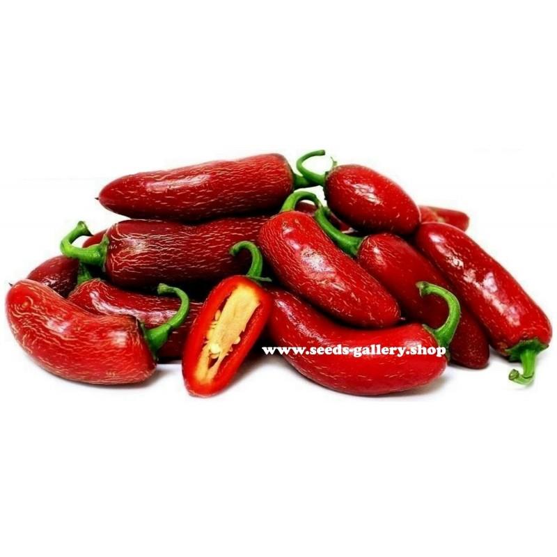 Σπόροι Τσίλι Πιπέρι Jalapeño Early 1.6 - 1