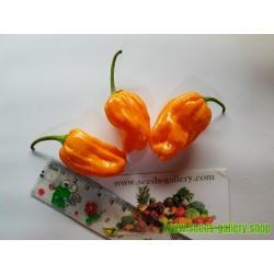 Semillas de Pimiento Numex Orange