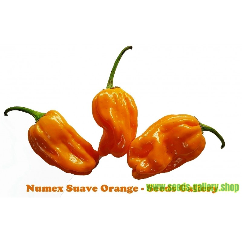 Graines de Numex Suave Orange Piments