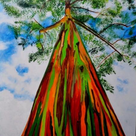 Rainbow Eucalyptus Seme (Eucalyptus deglupta)
