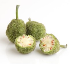 PAPER MULBERRY Seeds 1.55 - 2