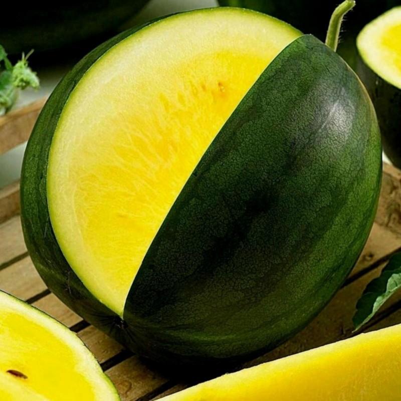 Sementes de melancia amarela JANOSIK 1.95 - 1