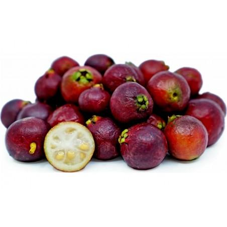 Erdbeer-Guave Samen 1.5 - 1