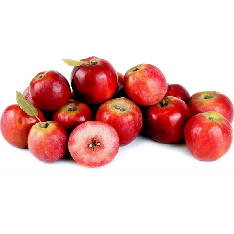 Siberian Crab Apple Seeds - Fast, Fragrant, Hardy (Malus baccata) 1.75 - 1