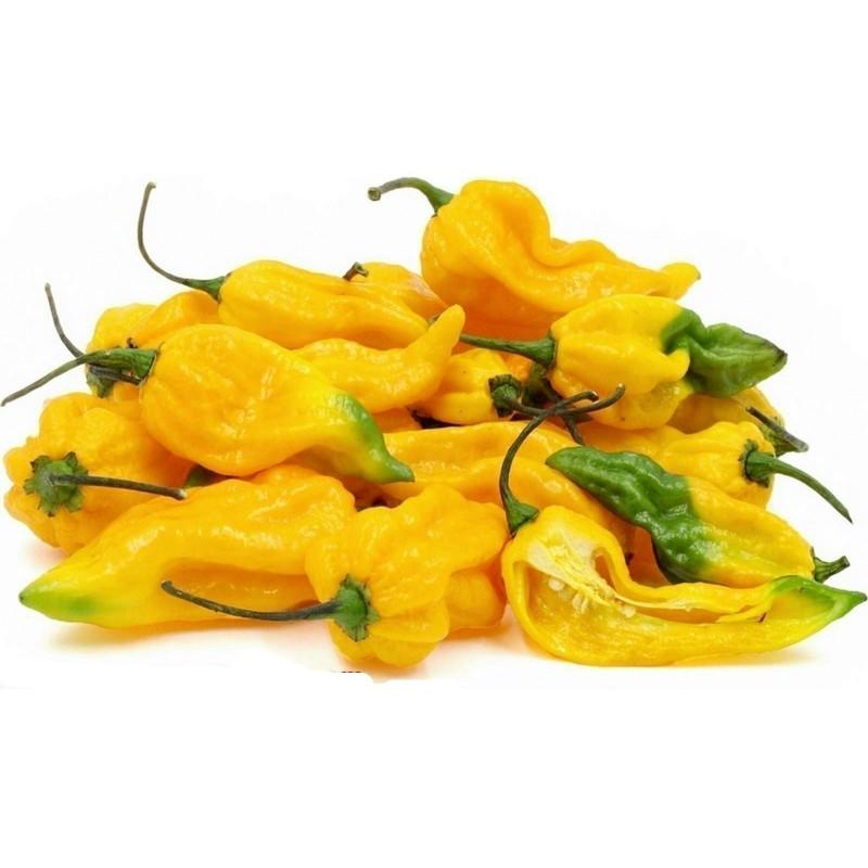 Sementes de Fatali Pepper Pimenta 2.5 - 1