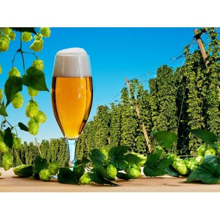 Beer Hops Seeds (Humulus lupulus) 1.85 - 3